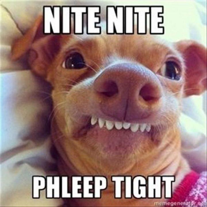 "101 Good Night Memes - ""Nite nite phleep tight."""