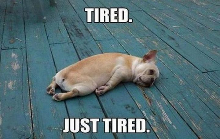 "101 Good Night Memes - ""Tired. Just tired."""