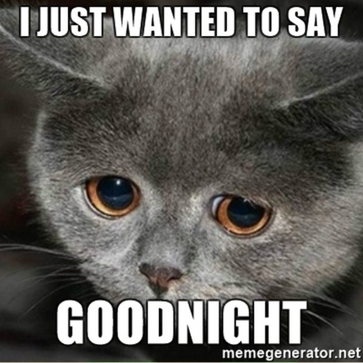 "101 Good Night Memes - ""I just wanted to say goodnight."""