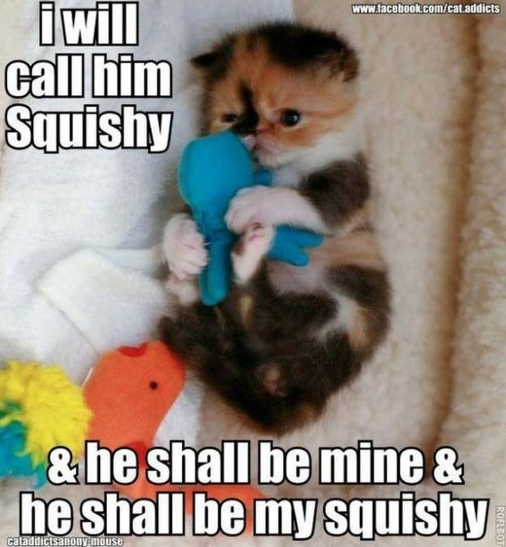 "101 Good Night Memes - ""I will call him Squishy and he shall be mine and he shall be my squishy."""
