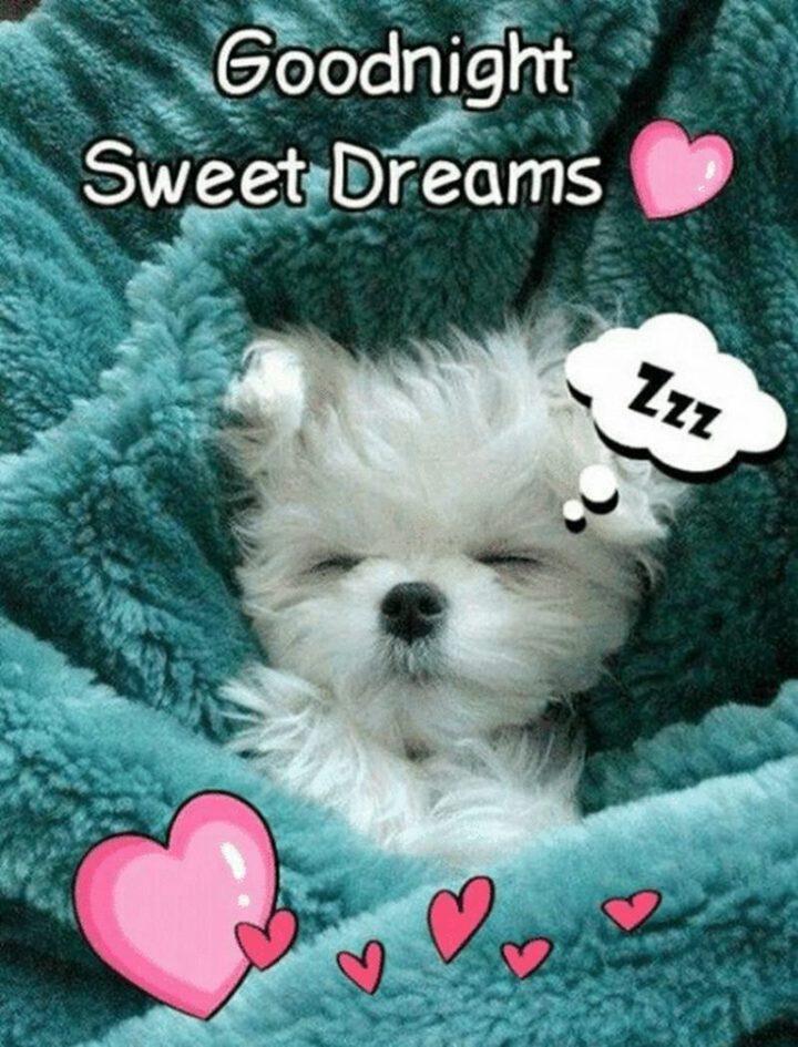 "101 Good Night Memes - ""Goodnight. Sweet Dreams."""