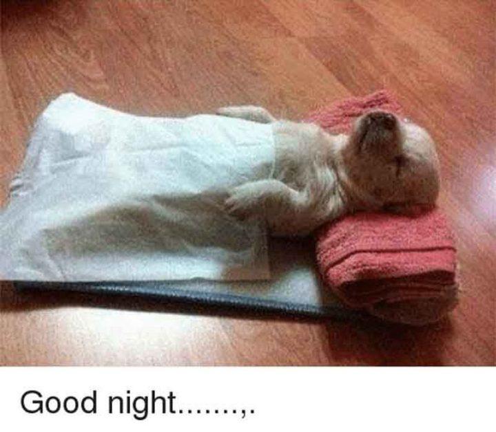 """101 Good Night Memes - """"Good night..."""""""