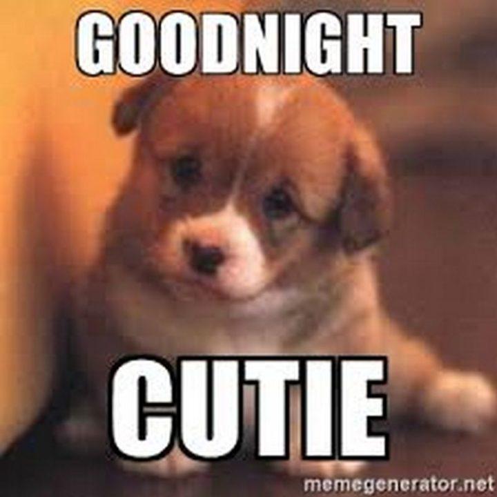 "101 Good Night Memes - ""Goodnight cutie."""