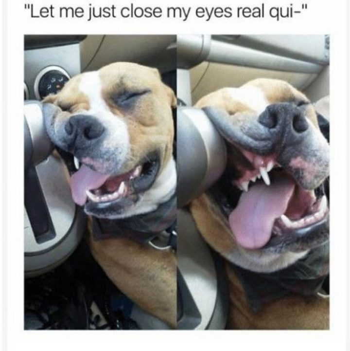 "101 Good Night Memes - ""Let me just close my eyes real qui-."""