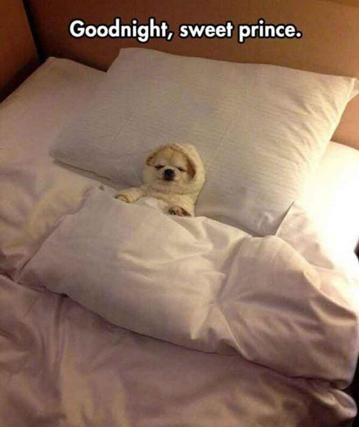 "101 Good Night Memes - ""Goodnight, sweet prince."""
