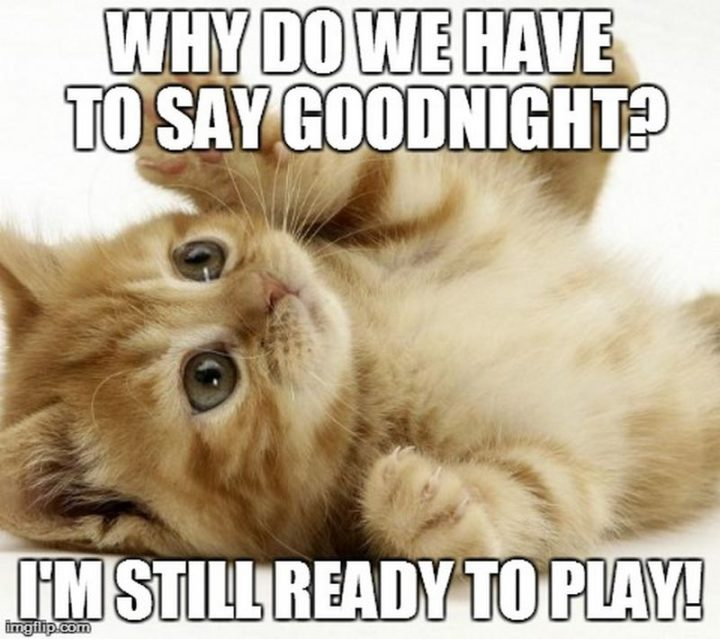 "101 Good Night Memes - ""Why do we have to say goodnight? I'm still ready to play!"""