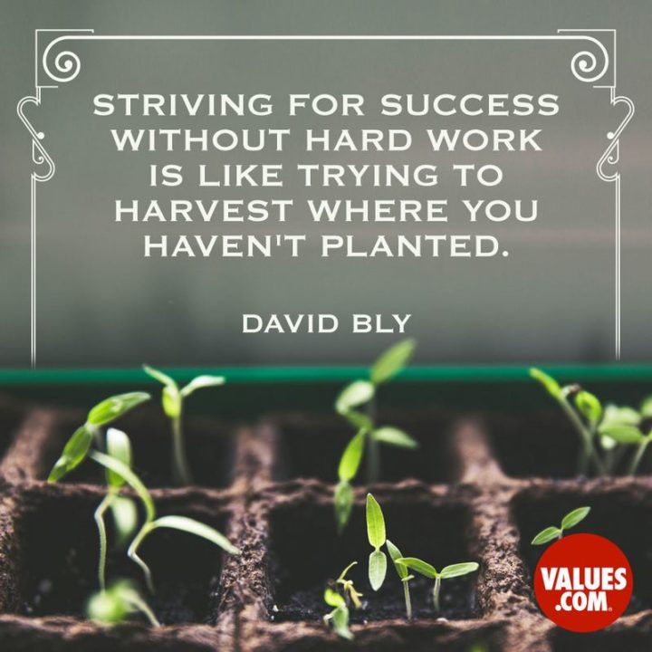 "51 Hard Work Quotes - ""Striving for success without hard work is like trying to harvest where you haven't planted."" - David Bly"