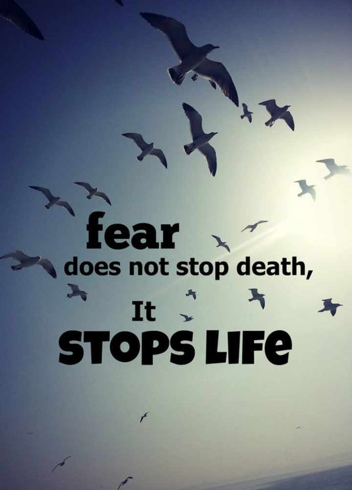 "75 Short Quotes - ""Fear does not stop death, it stops life."" - Unknown"