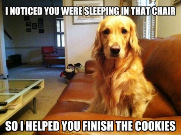 """""""I noticed you were sleeping in that chair so I helped you finish the cookies."""""""
