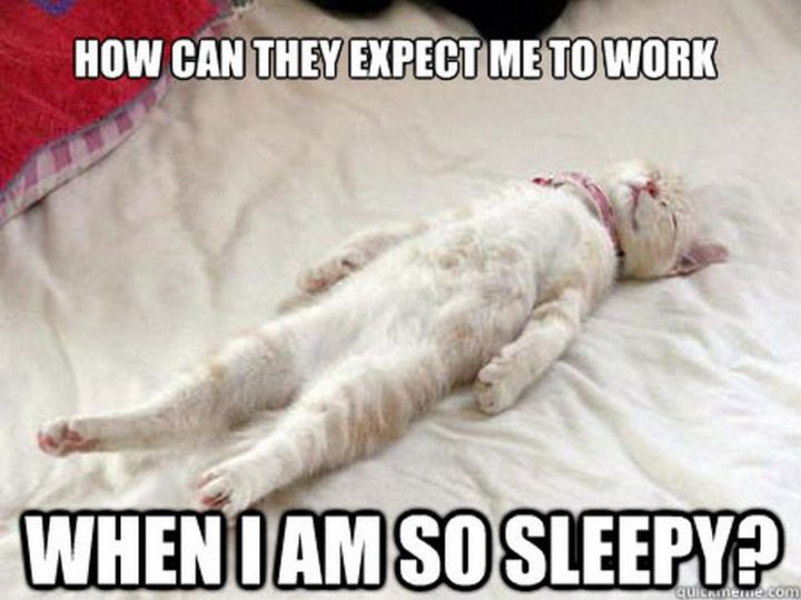 """""""How can they expect me to work when I am so sleepy?"""""""