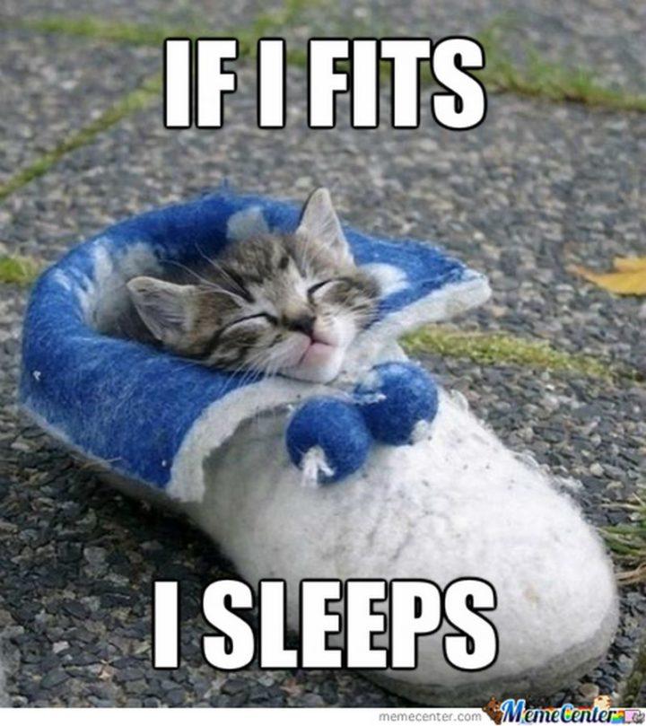 """""""If I fits I sleeps."""""""