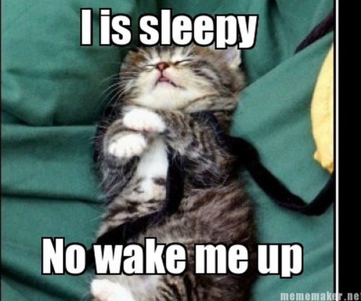 """""""I is sleepy. No wake me up."""""""