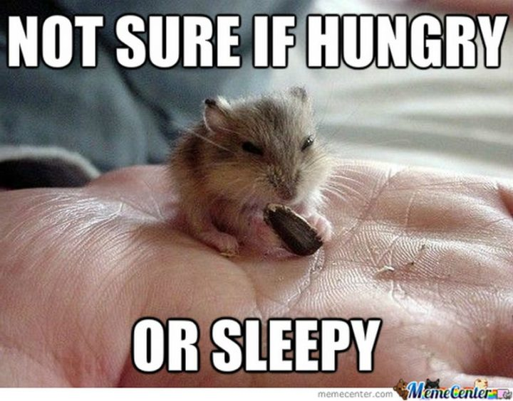 """""""Not sure if hungry or sleepy."""""""