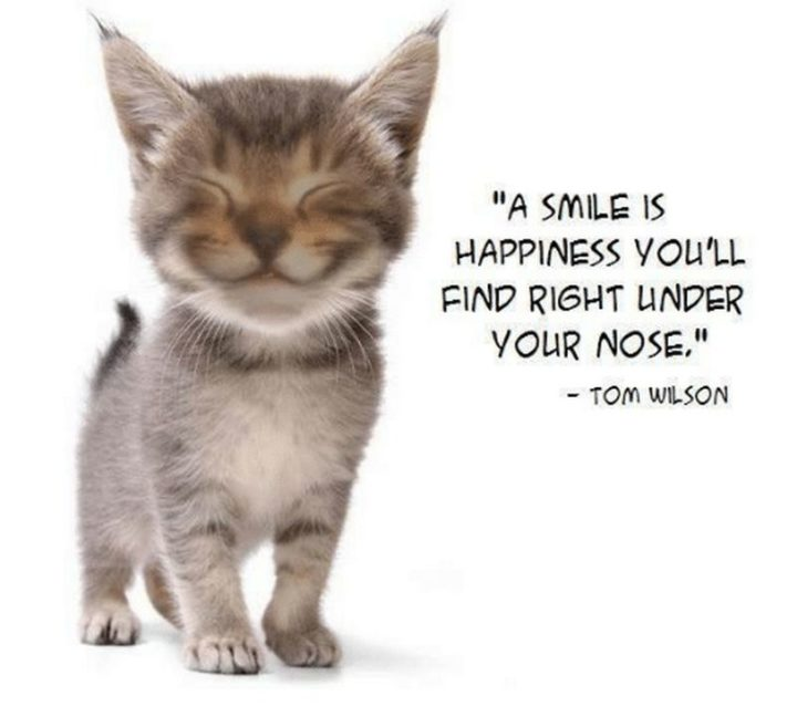 """55 Smile Quotes - """"A smile is happiness you'll find right under your nose."""" - Tom Wilson"""