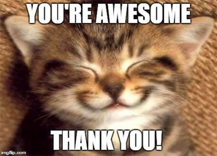 """101 Thank You Memes - """"You're awesome. Thank you!"""""""
