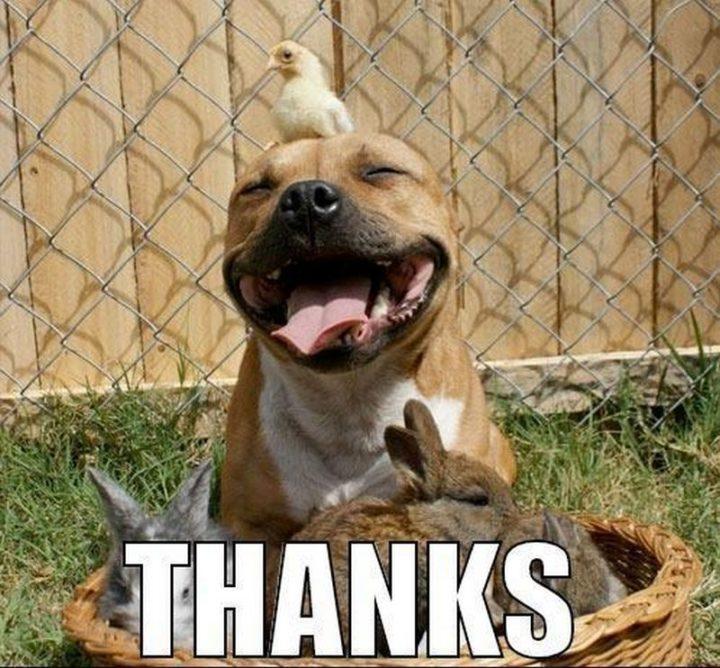 "101 Thank You Memes - ""Thanks."""