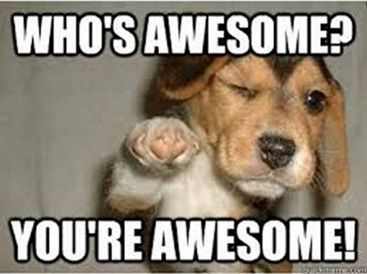 """101 Thank You Memes - """"Who's awesome? You're awesome!"""""""