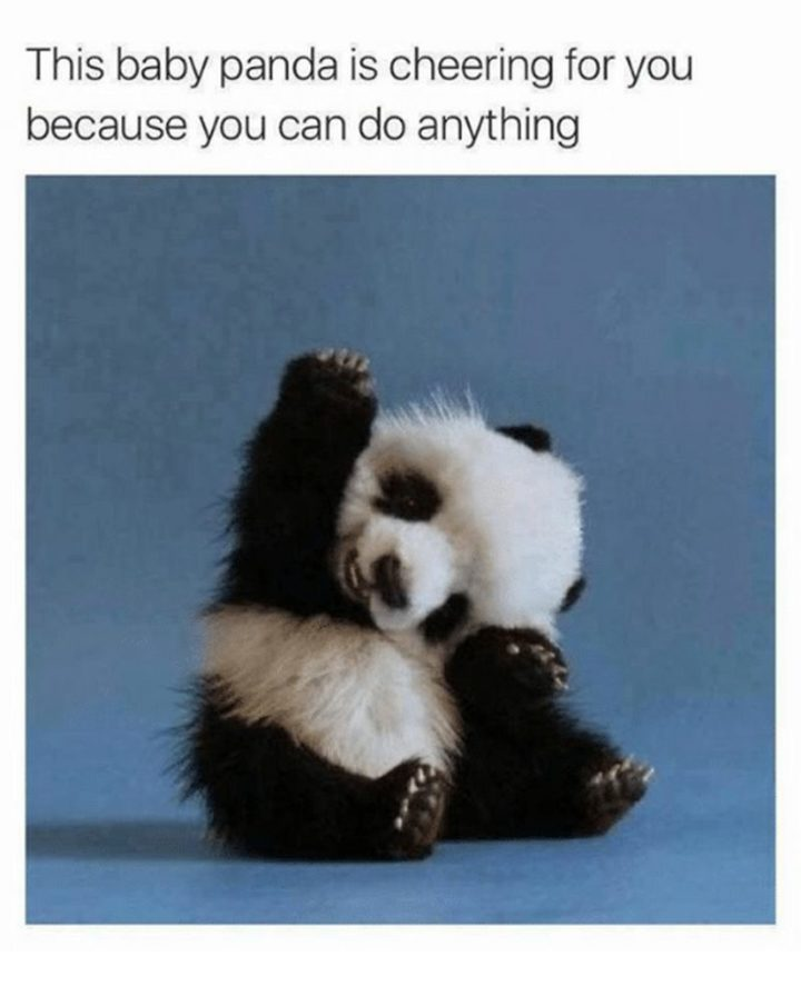 "101 You Can Do It Memes - ""This baby panda is cheering for you because you can do anything."""