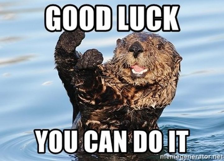 "101 You Can Do It Memes - ""Good luck, you can do it."""