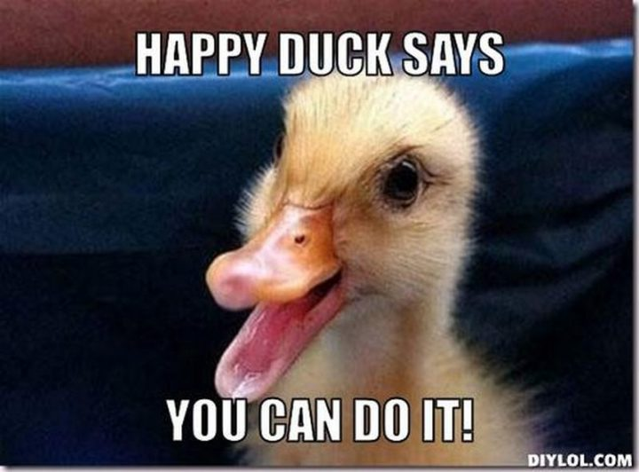 "101 You Can Do It Memes - ""Happy duck says you can do it!"""