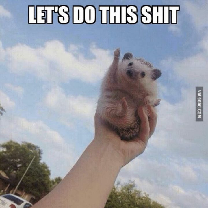 "101 You Can Do It Memes - ""Let's do this shit."""