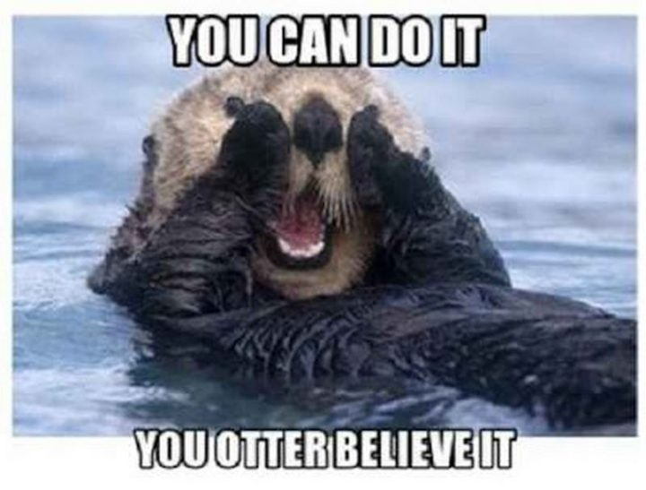 "101 You Can Do It Memes - ""You can do it. You otter believe it."""