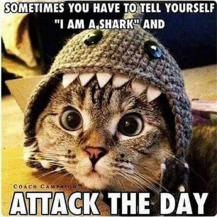 "101 You Can Do It Memes - ""Sometimes you have to tell yourself 'I am a shark' and attack the day."""