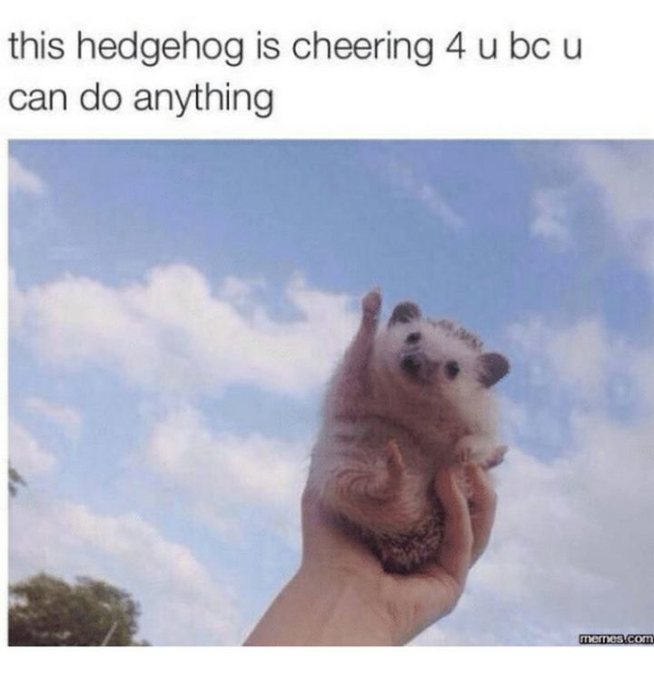 "101 You Can Do It Memes - ""This hedgehog is cheering 4 u bc u can do anything."""