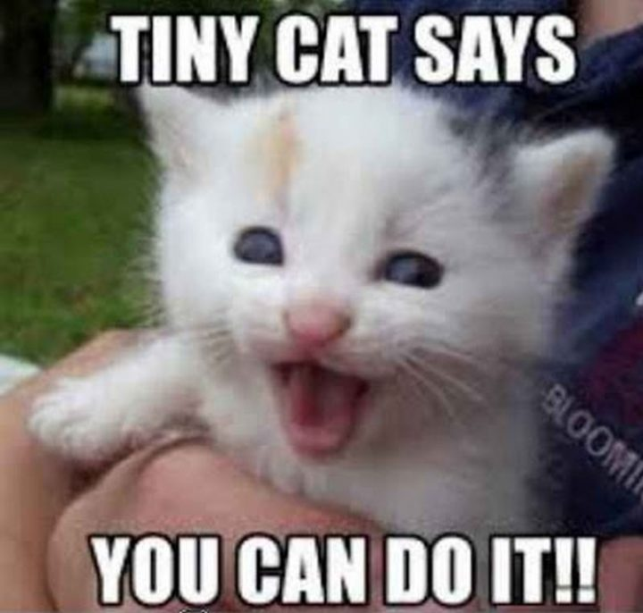"101 You Can Do It Memes - ""Tiny cat says you can do it!!"""