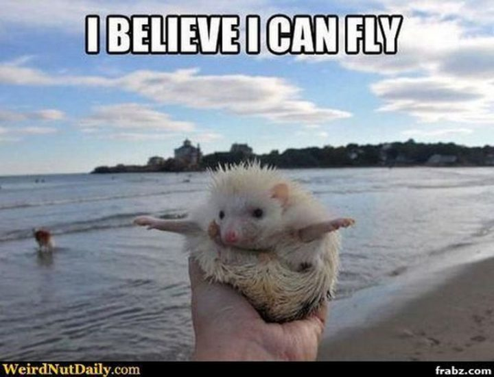 "101 You Can Do It Memes - ""I believe I can fly."""