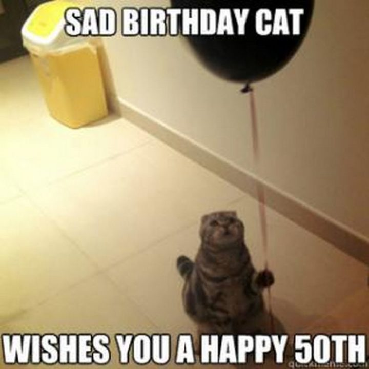 "101 Happy 50th Birthday Memes - ""Sad birthday cat wishes you a happy 50th."""