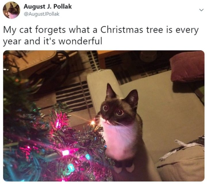 """87 Christmas Memes - """"My cat forgets what a Christmas tree is every year and it's wonderful."""""""