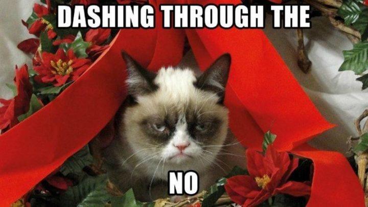 "87 Christmas Memes - ""Dashing through the no."""