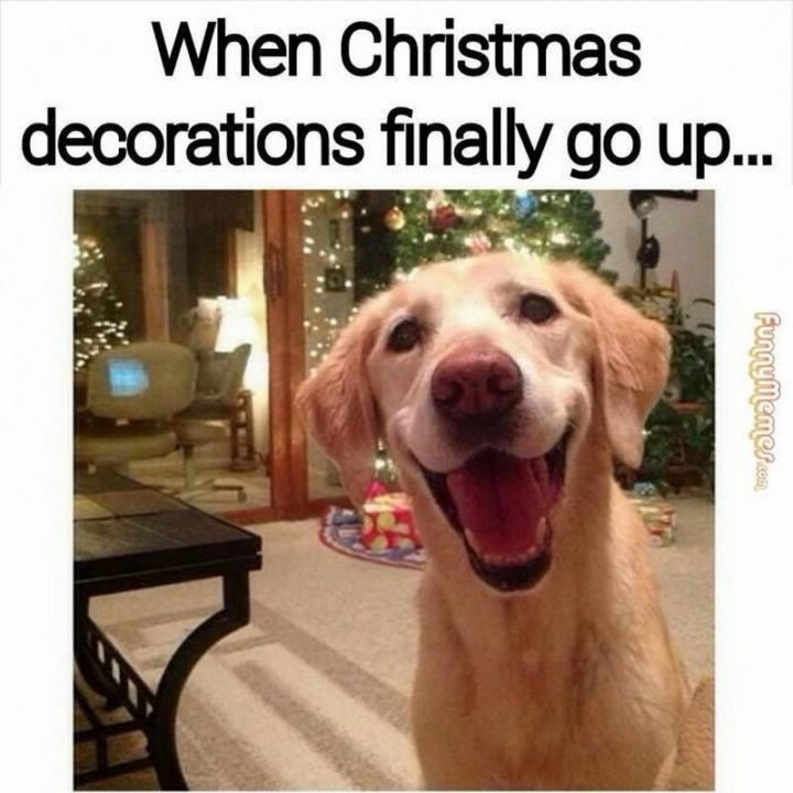 """87 Christmas Memes - """"When Christmas decorations finally go up..."""""""