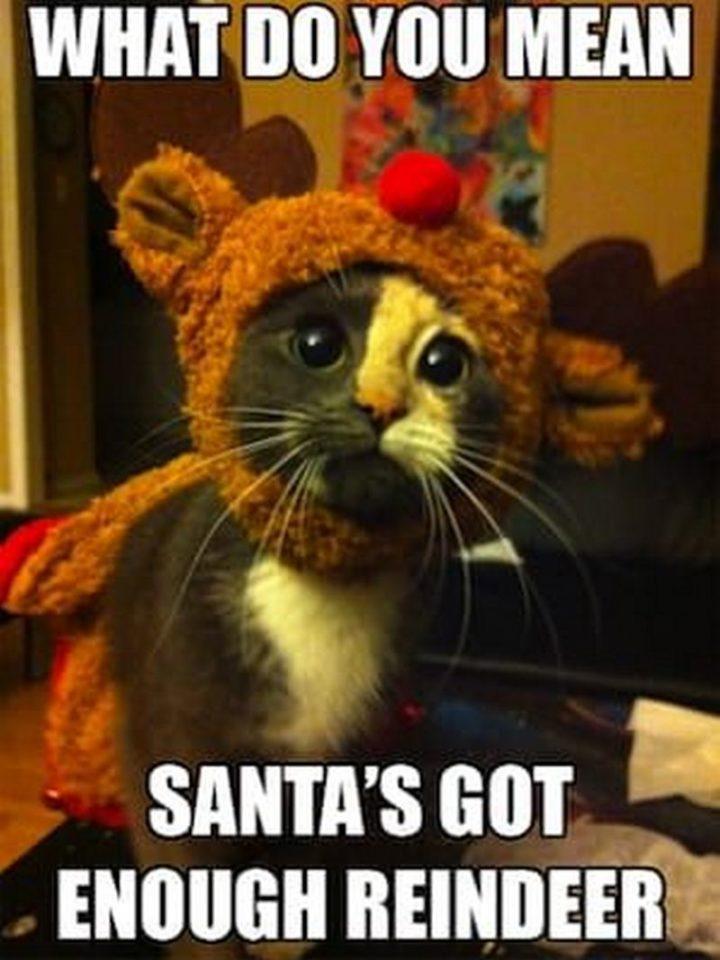 "87 Christmas Memes - ""What do you mean Santa's got enough reindeer."""