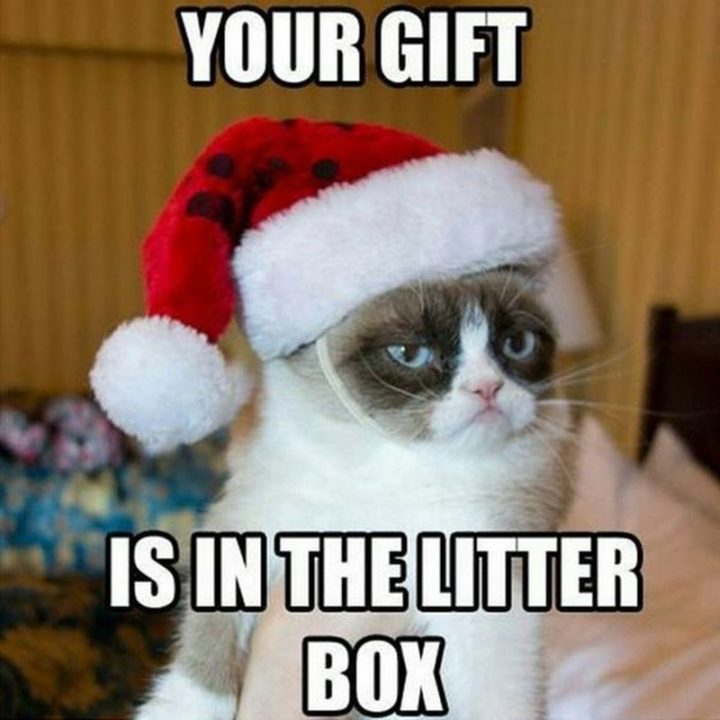 """87 Christmas Memes - """"Your gift is in the litter box."""""""
