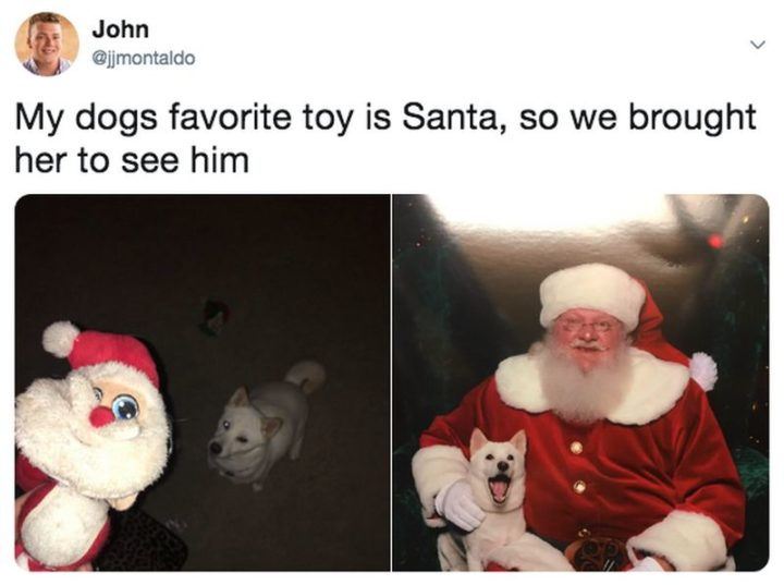 """87 Christmas Memes - """"My dog's favorite toy is Santa, so we brought her to see him."""""""