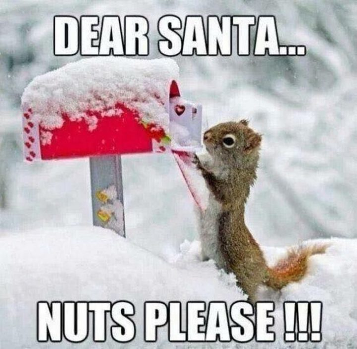 "87 Christmas Memes - ""Dear Santa...Nuts please!!!"""