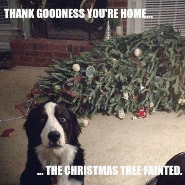"""87 Christmas Memes - """"Thank goodness you're home...The Christmas tree fainted."""""""