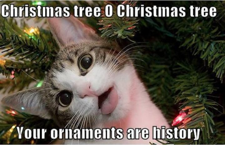 """87 Christmas Memes - """"Christmas tree O Christmas tree, your ornaments are history."""""""
