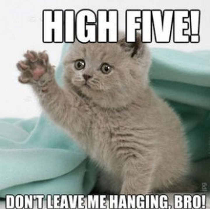 "71 Congratulations Memes - ""High five! Don't leave me hanging, bro!"""