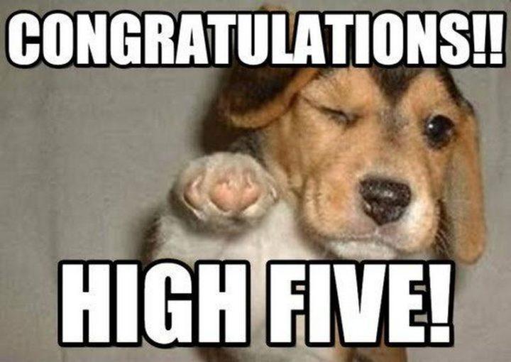 """71 Congratulations Memes - """"Congratulations!! High five!"""""""