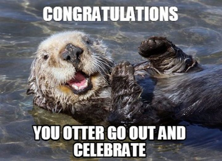"71 Congratulations Memes - ""Congratulations. You otter go out and celebrate."""