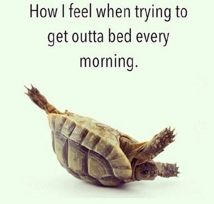 "71 Pregnancy Memes - ""How I feel when trying to get outta bed every morning."""