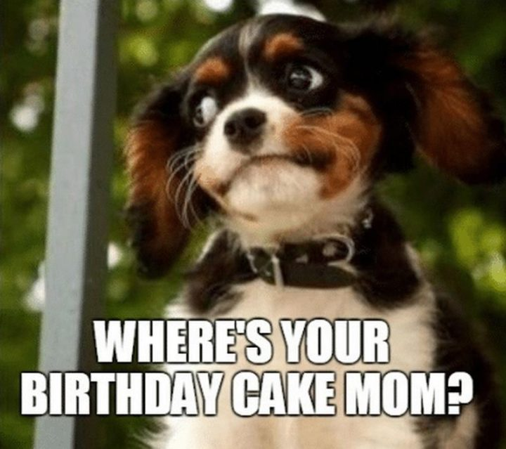"101 Happy Birthday Mom Memes - ""Where's your birthday cake mom?"""