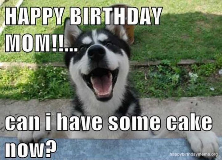 "101 Happy Birthday Mom Memes - ""Happy birthday mom!!...Can I have some cake now?"""