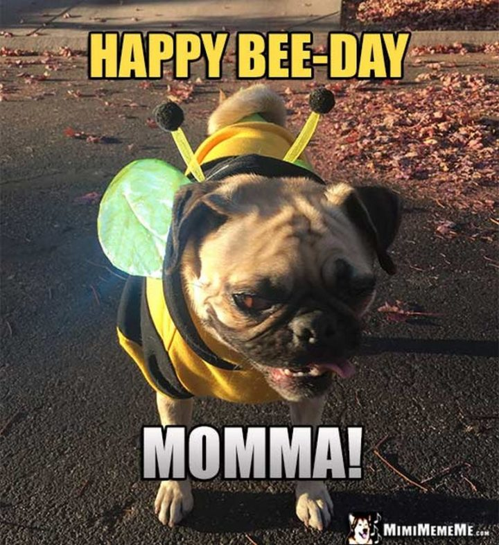 "101 Happy Birthday Mom Memes - ""Happy bee-day momma!"""