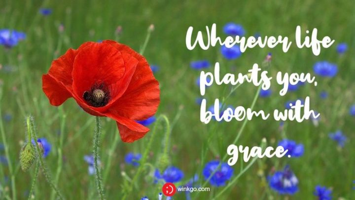 """47 """"Life is Beautiful"""" Quotes - """"Wherever life plants you, bloom with grace."""" - Unknown"""