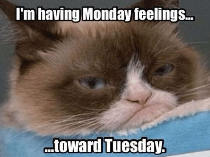 """55 Tuesday Quotes - """"I am having Monday feelings towards Tuesday."""" - Unknown"""