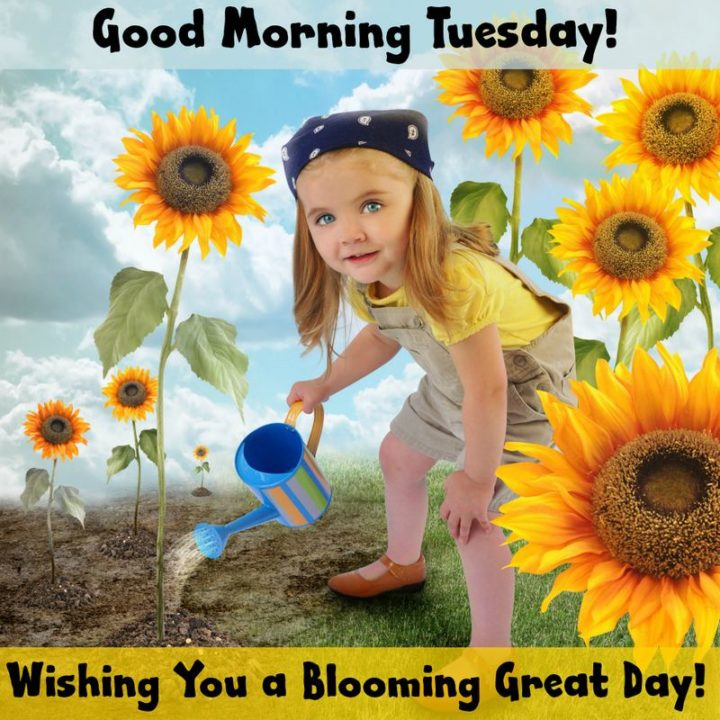 """55 Tuesday Quotes - """"Good Morning Tuesday! Wishing you a blooming great day!"""" - Unknown"""
